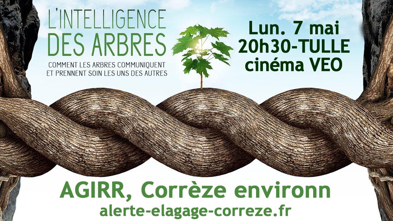 """TULLE ciné débat """"l'intelligence des arbres"""" – cinéma VEO"""
