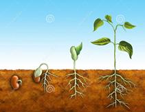 De la graine à la plante @ Les Renaudets