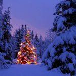 Un Bain de Forêt pour fêter l'Hiver et Noël !