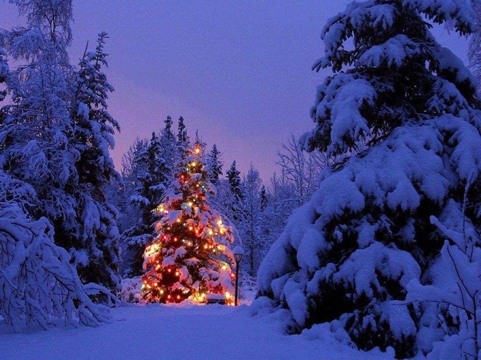 Lostanges : Bain de Forêt / Brunch de Noël @ La Boureyrie