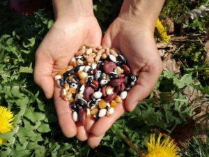 Grainothèque Party : Atelier SEL de Terre « Semences et Jardin » à Ayen @ Café chez Nadine