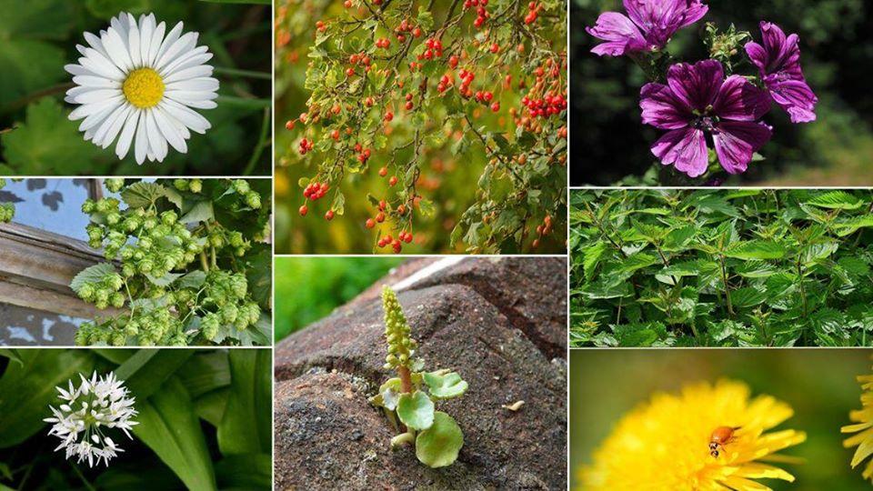 Sortie Plantes comestibles au Lac du Causse @ Parking de la digue du lac du Causse