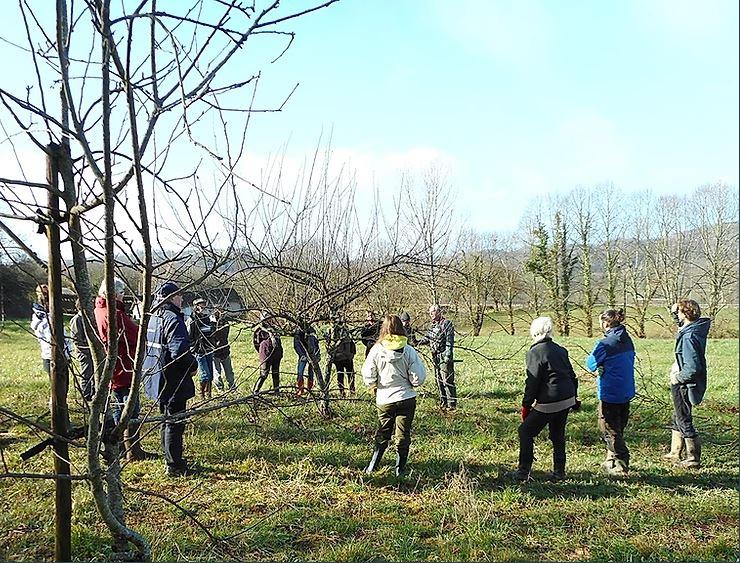 Initiation taille douce des arbres fruitiers @ Verger conservatoire
