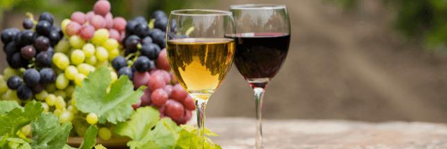 Découverte et dégustation de vins nature @ Battement d'ailes