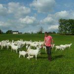 Solidarité pour les chèvres de Monsieur Alain