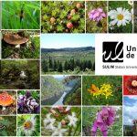 Stage Naturaliste - Les principes actifs des plantes à Meymac