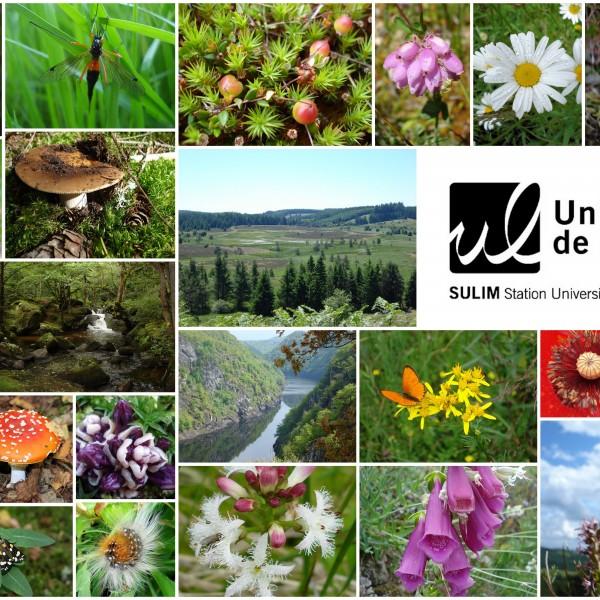 Stage Naturaliste - Plantes indicatrices forestières à Meymac @ Station Universitaire du Limousin