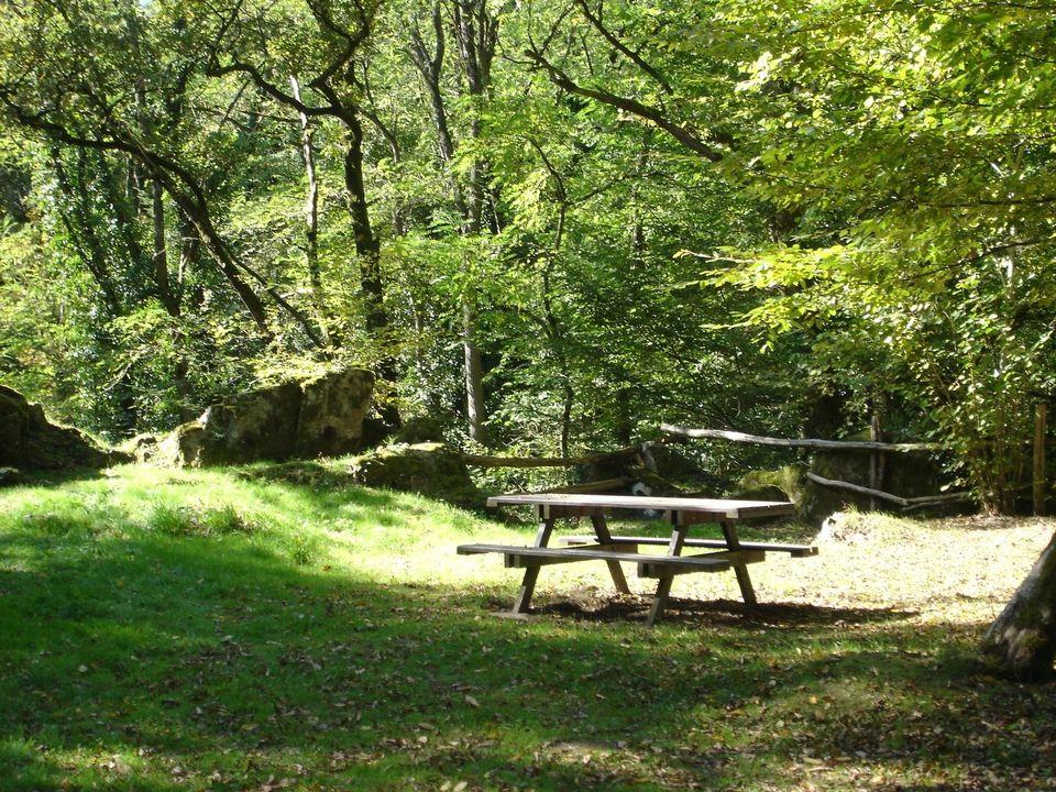 Balade : La flore et ses usages aux Cascades de Bialet @ Les Cascades De Bialet