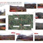 """Coupes rases de forêts en Corrèze : l'appel de """"Faite et Racines"""""""