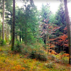 Point de vue d'un propriétaire et gestionnaire forestier corrézien