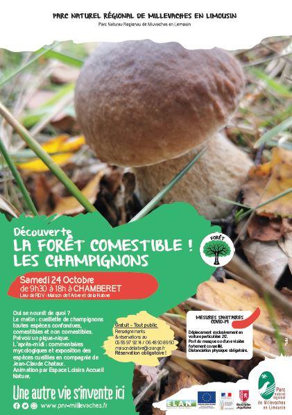 La forêt comestible, Champignons et mycologie @ Maison de l'Arbre et de la Nature