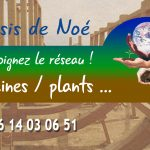 Les Oasis de Noé : un réseau  pour multiplier et propager des plantes résitantes pour le monde de demain