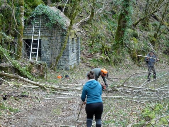 Faîte et racines : Dimanche en forêt @ La Roche Canillac
