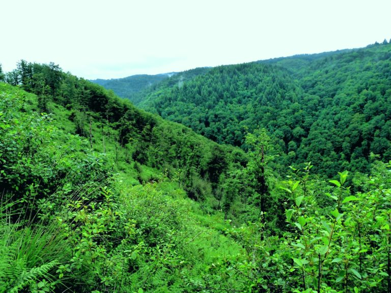 inventaire de la biodiversité vallée de la Cere