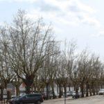Pétition contre l'abattage des arbres du marché d'Objat