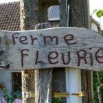 Visite de la ferme fleurie à Vegennes