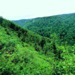 Création et étude d'un sanctuaire de biodiversité par Faite et Racines