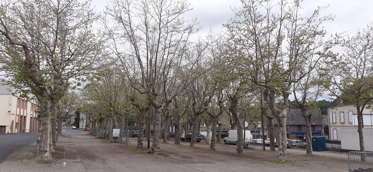 Non à l'abbatage des platanes centenaires d'Objat en Corrèze