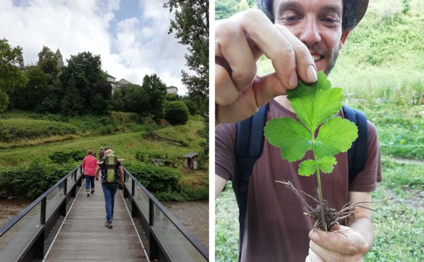 Balade Plantes sauvages et comestibles @ Au bord de la Vézère